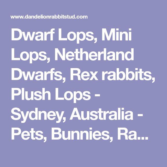 Dwarf Lops, Mini Lops, Netherland Dwarfs, Rex rabbits, Plush Lops - Sydney, Australia - Pets, Bunnies, Rabbits for sale