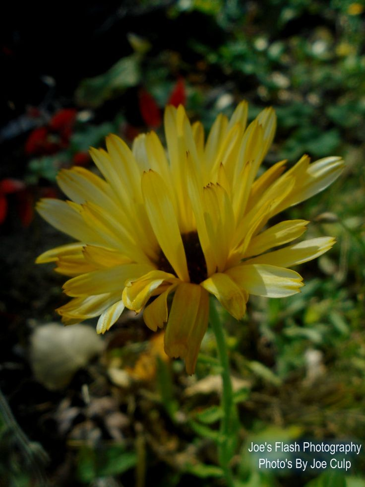 The last surviving wildflower on an Autumn Day 2015