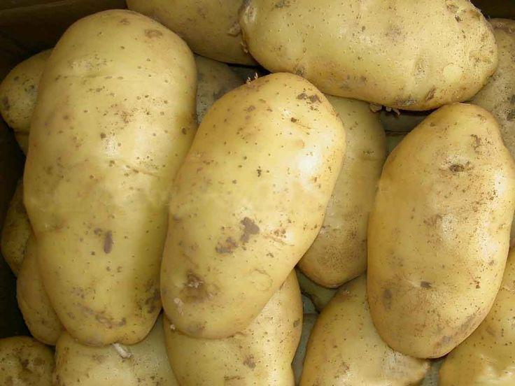 5 tips untuk memilih kentang dengan kualitas bagus untuk menghasilkan olahan yang lezat dan enak