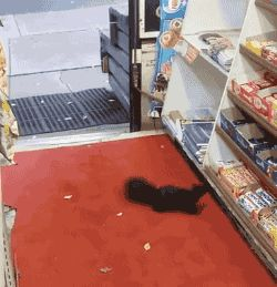 Squirrel Repeatedly Steals Candy Bars From Grocery Store