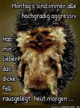 Lustige Guten Morgen Bilder Tiere Guten Morgen Funny Funny