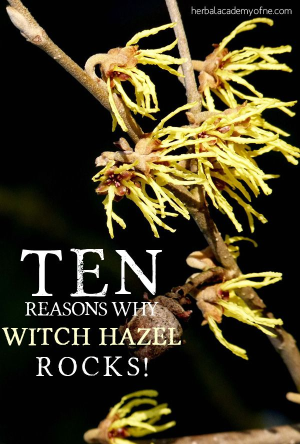 10 Reasons Why Witch Hazel Rocks and how to use it in home remedies!
