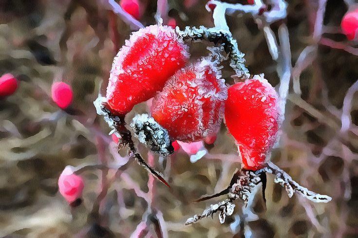 Frozen. Holmlia, Oslo, Norway