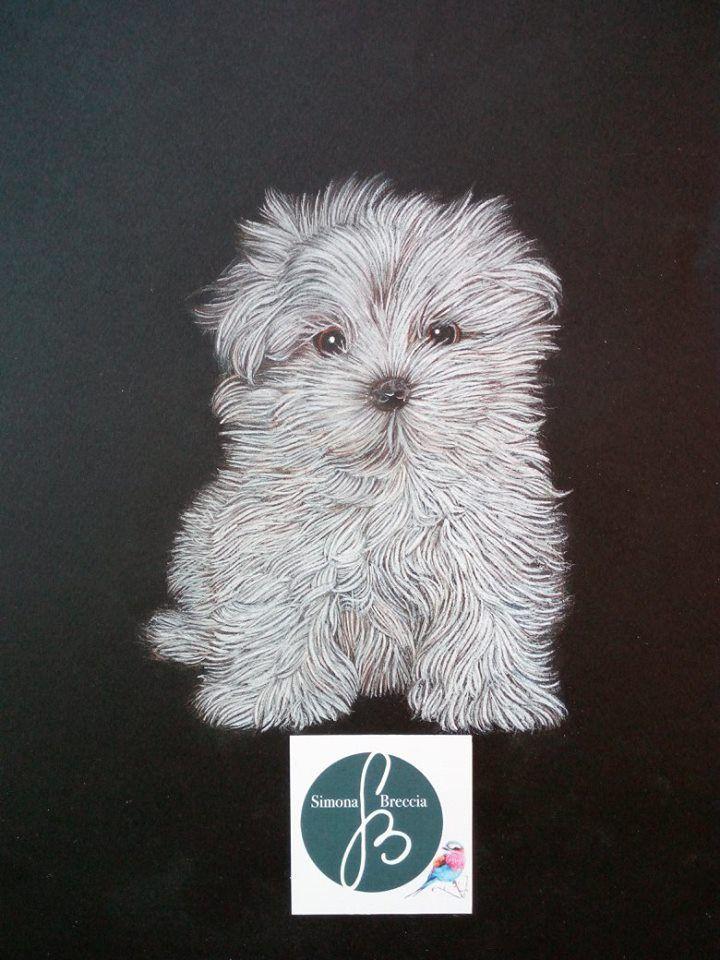 Ritratto di un Cucciolo di Cane Maltese. Realizzato con Tecnica Mista, acquerello e pastello, su carta 20 x 30 cm. Artigiano: Simona Breccia #Ductilia