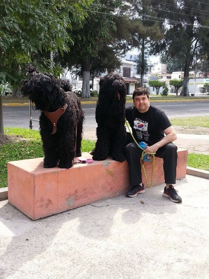 Mickaela y Max Terrier ruso negro de paseo . Black russian terrier