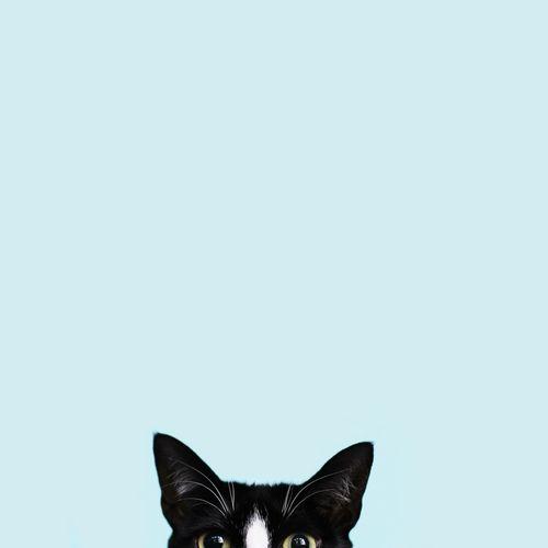 cat ears blue                                                       …