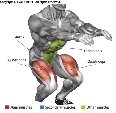 QUADRICEPS -  ISOMETRIC SQUAT