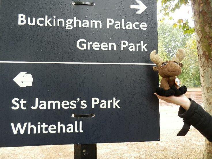 Mr. Moose on his way to Buckingham palace.