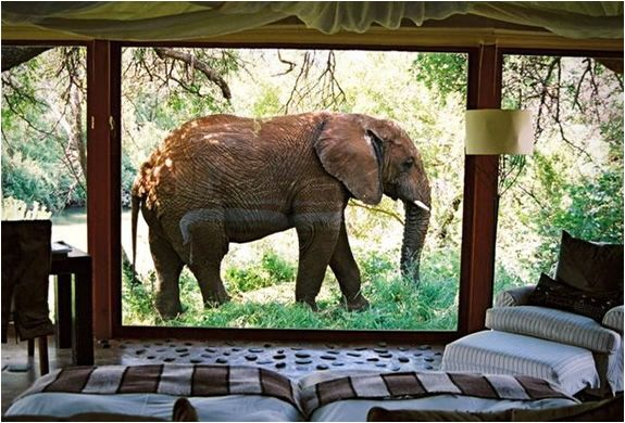 Makanyane Safari Lodge is a rustic but at the same time luxurious accommodation by the Marico River in Madikwe Game Reserve South Africa.: Elephants, Bucket List, Southafrica, South Africa, Makanyane Safari, Places, Safari Lodge, Travel, Animal