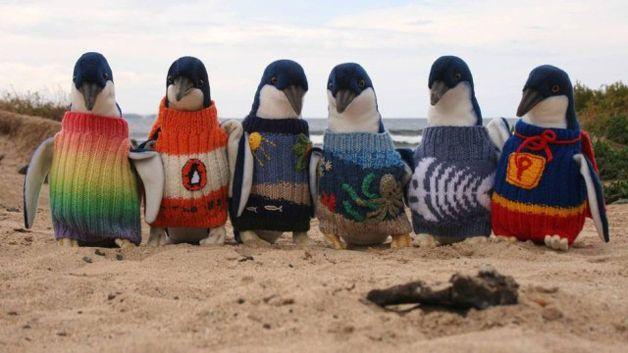 enquanto os animais aguardam a limpeza do óleo, os biólogos desenvolveram um método simples, peculiar e bastante fofo: os pinguins são vestidos com casaquinhos de lã, estes tecidos pelo Sr. Alfred Date que tem 109 anos e é a pessoa mais velha da Austrália