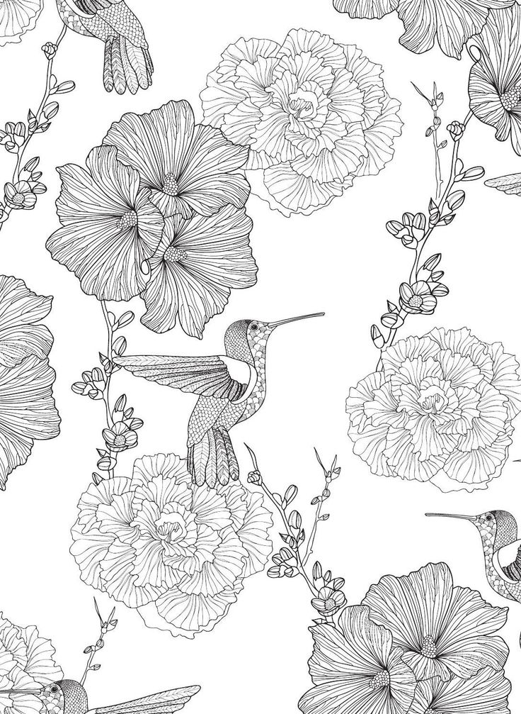Bird Coloring Design A Collection Of Illustrations And