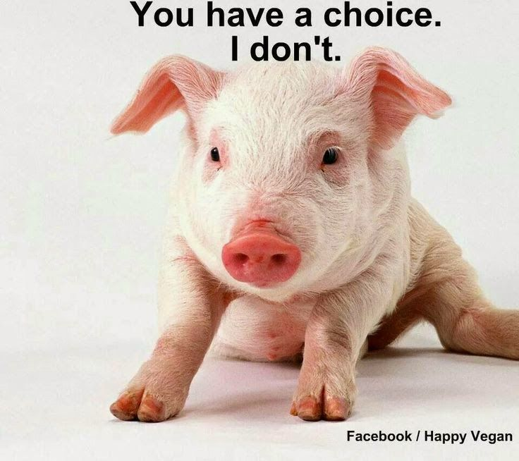 M . O R T Y C J A - blog lifestylowy: ABC diety wegetariańskiej - konkrety dla początkuj...