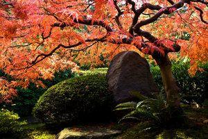 Inspirerende japanske hager