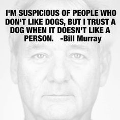 bill murray dog quote - Google Search