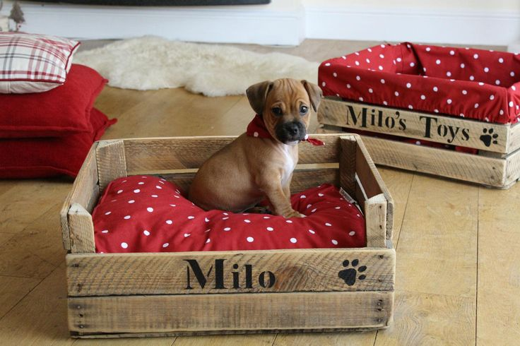 How to give your dog the most comfy bed but still be organised with their toys.....