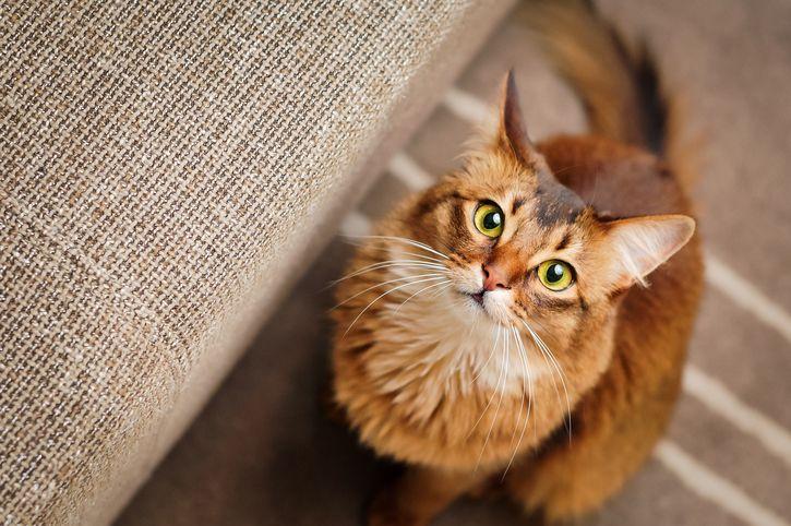 5 conseils pour ceux qui ont un chat âgé noté 3.4 - 5 votes Quand un chat a une dizaine d'années, le poids de l'âge se fait de plus en plus sentir (et nous ne parlons pas que de la prise de poids ou l'amaigrissement que cela engendre). On se rend compte que sa vue,...