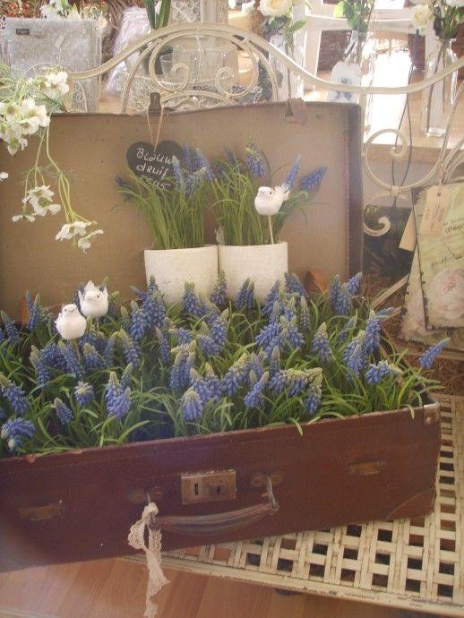 ⚘ koffertje blauwe druifjes...