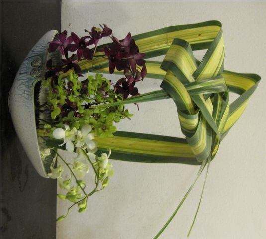 Best images about aacc enclosure on pinterest floral