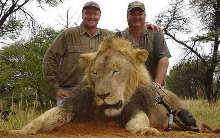 Walt Palmer (left), from Minnesota, who killed Cecil, the Zimbabwean lion (pictured here with another lion shot in Africa)