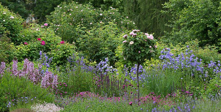 Rosenrabatte mit Pfirsichblättrigen Glockenblumen, Jakobsleiter, Diptam, Steppensalbei und Heidenelke | Natur im Garten