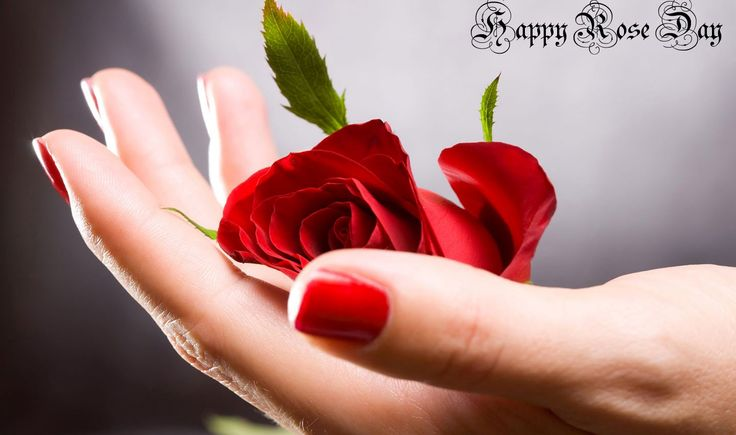 Happy Rose Day Images 2015