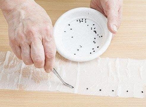 Рассада по-московски: посев в бумажные рулоны.  Если у вас возникают проблемы с размещением рассады на подоконнике, попробуйте посеять часть семян в бумажные рулоны. По-другому этот способ посева называют самокруткой или рассадой по-московски.  Метод самокрутки: что посеять?  Методом самокрутки можно сеять почти любые культуры: томаты, перцы, баклажаны, огурцы, лук, капусту, цветочную рассаду. Одно из достоинств способа — сеянцы не болеют черной ножкой, так как не соприкасаются с почвой…