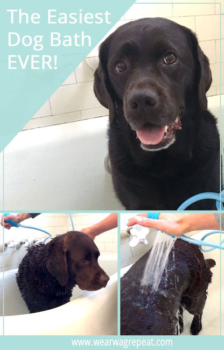 The Easiest Dog Bath Ever Dog Care Tips Dogs Disabled Dog