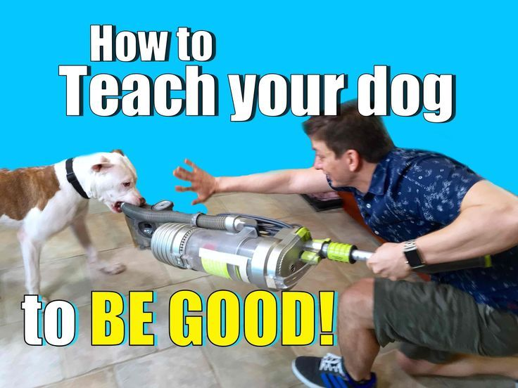 How to Get Your Dog to Listen to YOU Around ANYTHING - Even Vacuum Clean...