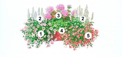 Blumenkasten Idee mit Verbene, Salbei, Mocca-Geranie, Erdbeer-Minze und Zauberglöckchen