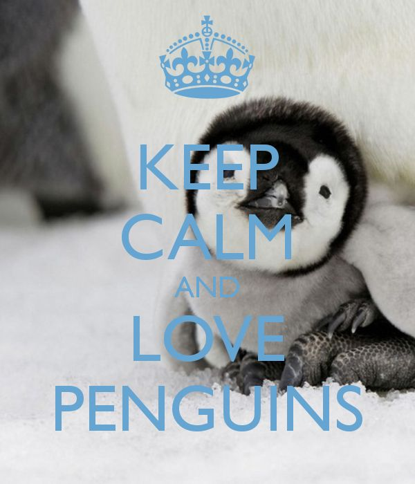 26 best images about penguin love on pinterest baby