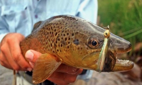 Fly fishing in Steamboat Springs, CO! On the agenda for June!