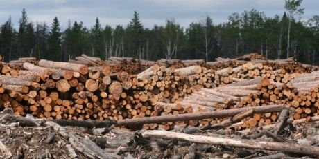Stop the attack on Greenpeace  A Canadian logging giant is bullying Greenpeace and other forest defenders with a 300 million dollar lawsuit! But together we can fight back! Click to find out how.