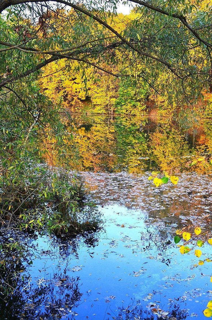 Фото Осенние мотивы - зеркало воды.. Альбом Осень 2015-16 - 12 фото. Фотографии sergey rodnov.