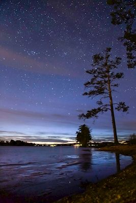 Starry night sky with streaks of blue and tall trees by the lake Svärdsjön, Sweden. Photographer Jacob Ericsson, available as poster at printler.com, the marketplace for photo art