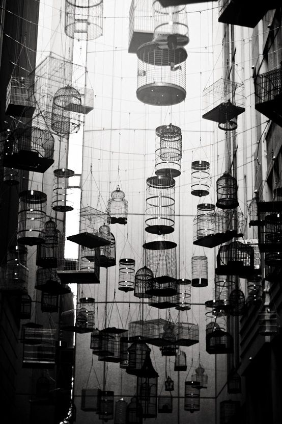 Fiona Gohari - Cage bird caged. S)
