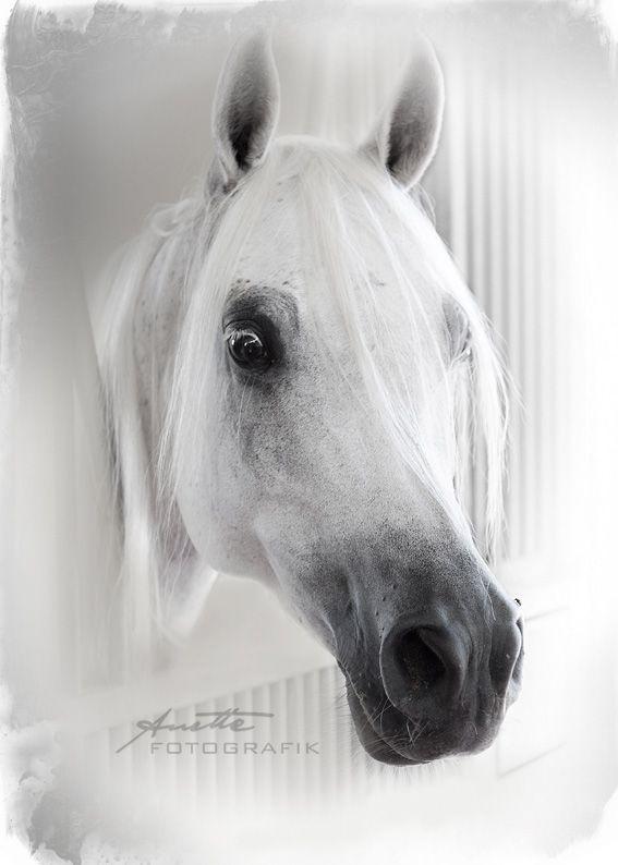 Fine Art Horse Photography  by Anette FOTOGRAFIK