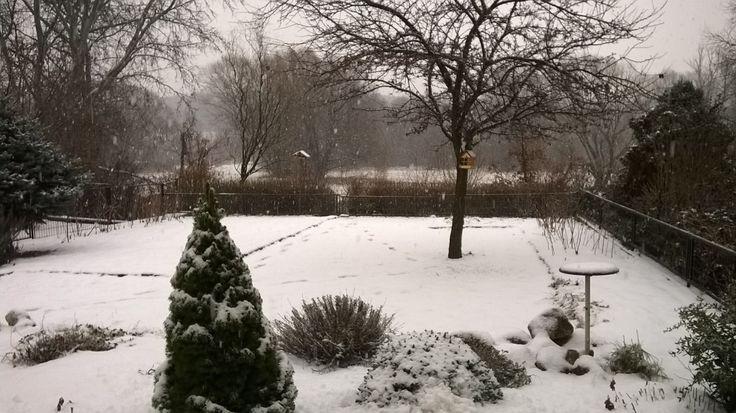Kilépek a kertbe. A fagyos, havas-zúzmarás reggel úgy terül el előttem, mint egy téli mesekönyv kiterített borítója. A Hold még pöffeszkedik, uralja a bágyadt látóhatárt. A Nap még éppen csak ébredezik, nyújtózkodik, lomhán, a meleget kispórolva küldi első fénysugarait. A levegő kristálytiszta, lélegzetelállító a téli táj látványa, így aztán könnyedén megbocsájtok az ilyenkor szokásosnál hidegebbért... (Fotó: Németh György – Kerepes)