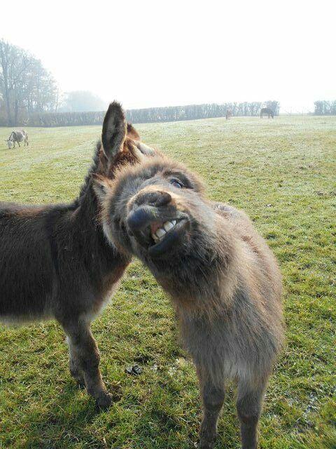 Wee donkey