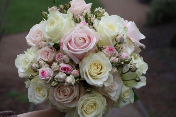Rosenknoppar & rosor i olika nivåer