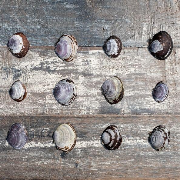 Introducing Antiqued Oak Saturna | Kentwood Floors