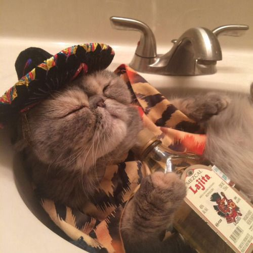 Happy Cinco de Mayo:)