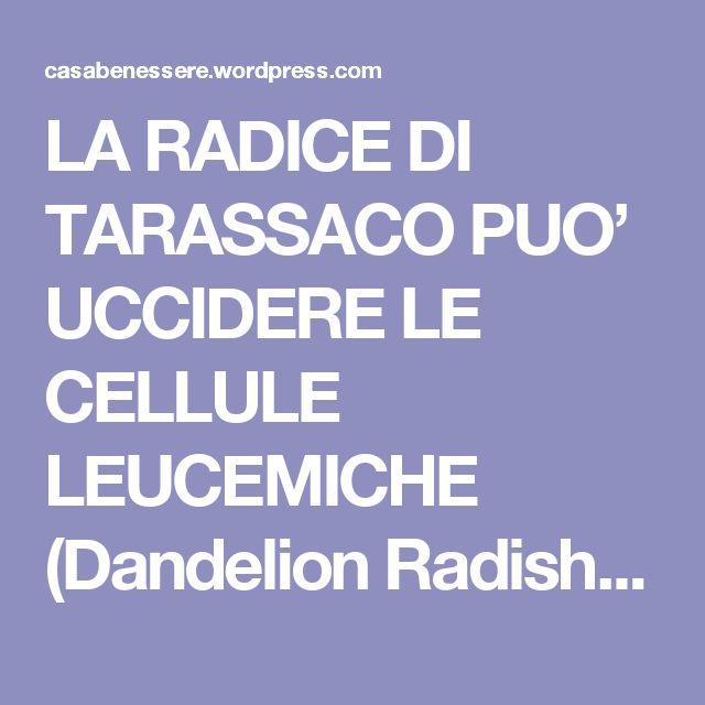 LA RADICE DI TARASSACO PUO' UCCIDERE LE CELLULE LEUCEMICHE (Dandelion Radish Can Kill Leukemia Cells) | La ForzaDellaNatura's Blog