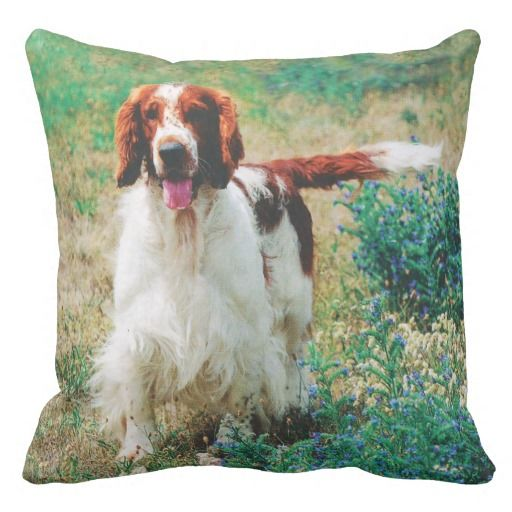 Welsh Springer Spaniel Ralf. Grade A Cotton Throw Pillow 20x20  Accent your home with grade A woven cotton custom pillows from Zazzle. Made of 100% grade A cotton, these soft pillows look great.
