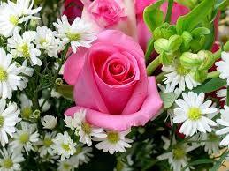 !!! Una rosa.