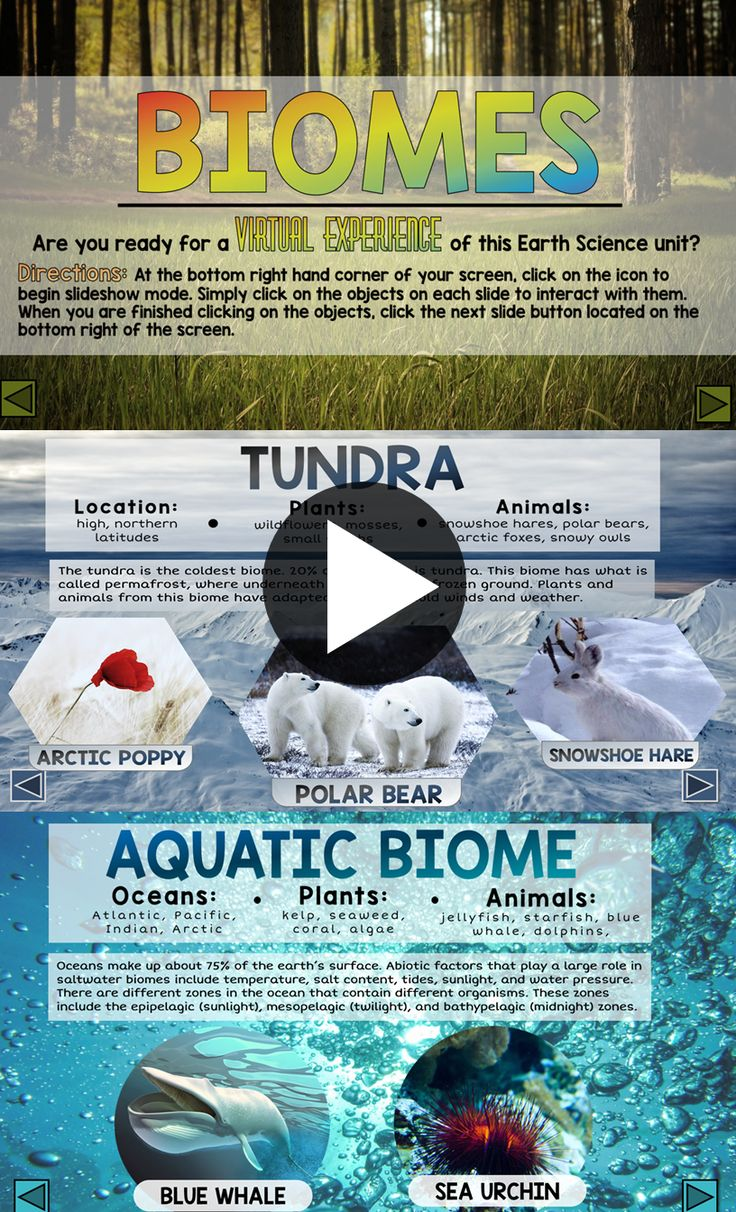 All about biomes - My students LOVE these interactive powerpoints!