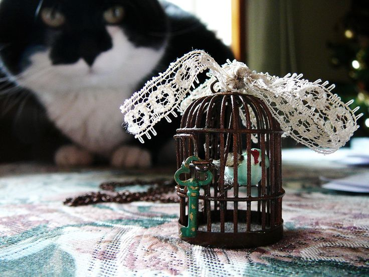 Ideas para decorar con jaulas para pájaro  - http://decoracion2.com/ideas-para-decorar-con-jaulas-para-pajaro/66944/?utm_source=smdeco2&utm_medium=socialclic&utm_campaign=deco2%2B66944 #Centro_De_Mesa, #Decorar_Con_Jaulas, #Estilo_Vintage, #Jaulas_Para_Pajaros