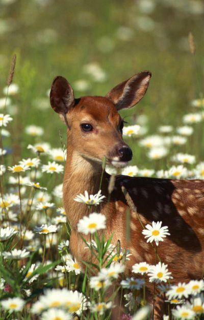 Natural Deer Repellent Human Hair