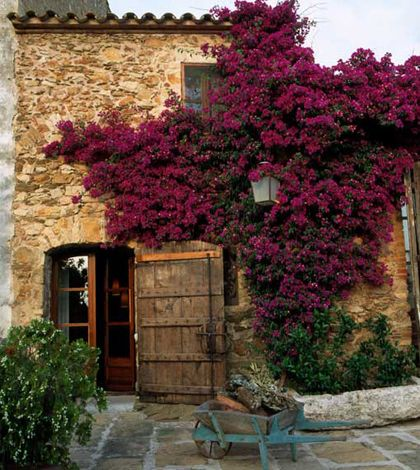 Sweeping red-violet adds drama to this entrance