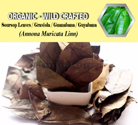 Prevent and treat cancer, Viral Infections, herpes, Pain Reduction, Smooth urination, Maintaining Bone Health, Boost Energy, Relieves Migraine, Anemia, and many more.. #soursopleaves #soursoptea #tea #herbalremedies #driedherbs