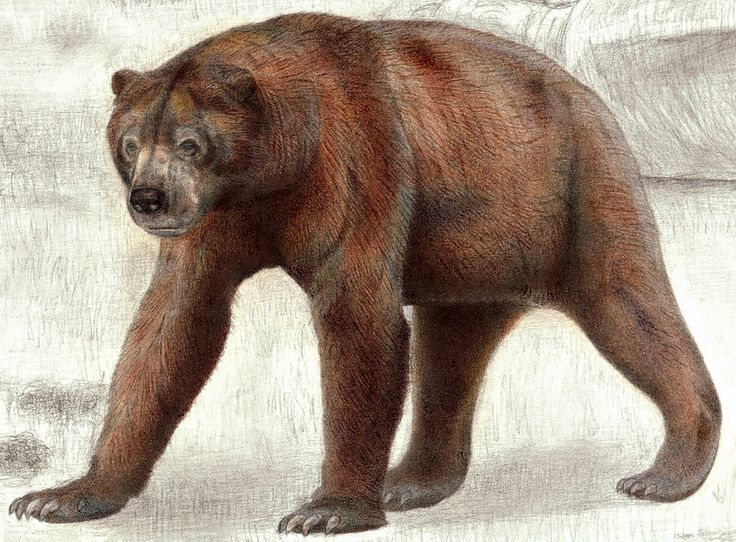 The South American Giant Short Faced Bear(Arctotherium angustidens) Newly edited | Flickr - Photo Sharing!